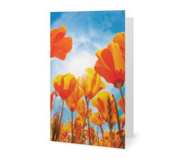 The field of tulips greeting card