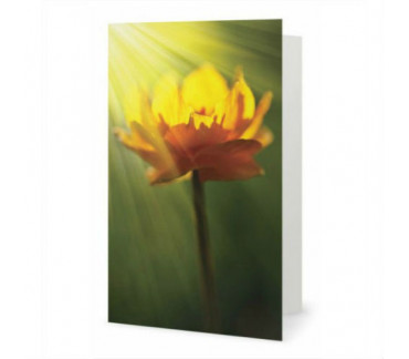 The ray in flower greeting card