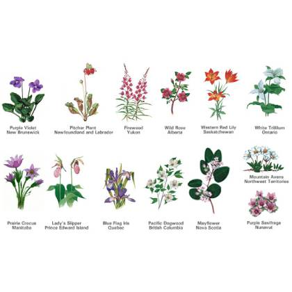 Complete Guide to Province Flowers