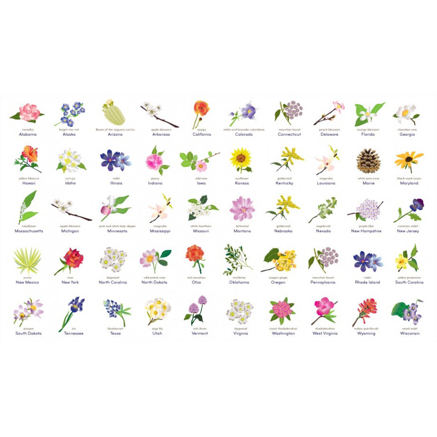 Complete Guide to State Flowers