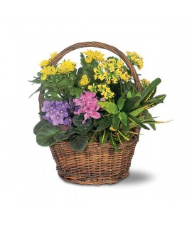 Small European Basket