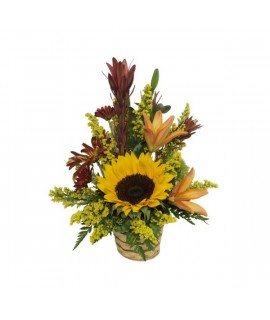 The warm color WFN arrangement